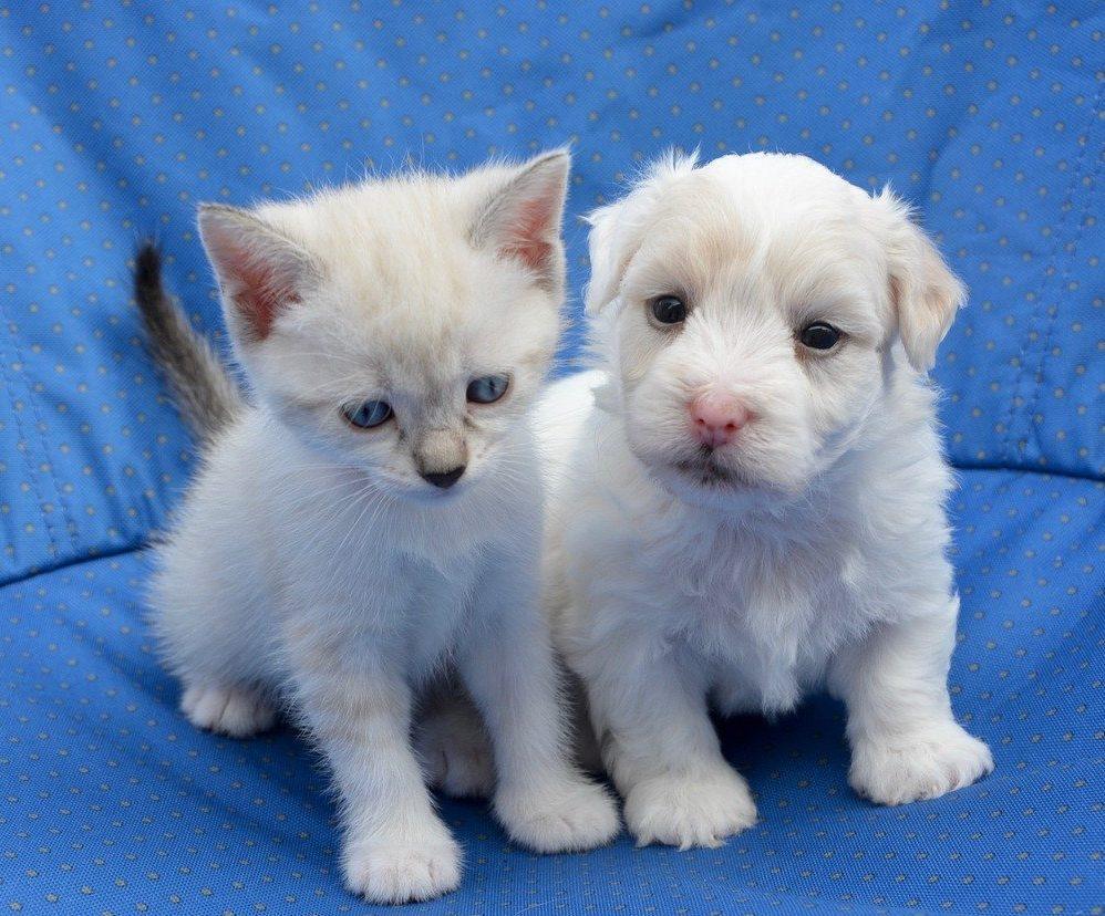pupy and kitten